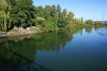 A King County habitat restoration site was one of Mark Powell's Green-Duwamish 'Swim Up' locations.